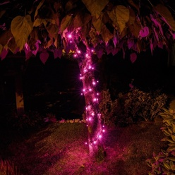 Catena luminosa decoLED - 5 m, rosa, LED 50 diodi
